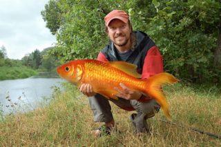 Niels-ving-zijn-eigen-goudvis