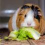 Ook steeds meer huisdieren worden vegan