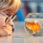 Basisschool mishandelt goudvis