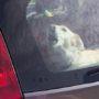 Voorbijganger redt hond uit lauwe auto