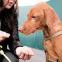 """""""Door die vaccinatie werd mijn hondje autistisch"""""""