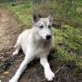Dierenbeul laat blote hond uit in ijskoud bos