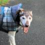 Hond vernederd met 'winterjas'