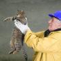 """""""Afschieten verwilderde katten is niet nodig"""""""
