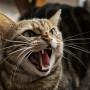 Een kat in huis… wat nu?
