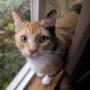 Kattenhater voerde Aldi-brokjes