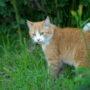 SGP wil loslopende katten verbieden