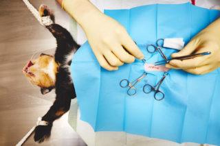 kat-katten-operatie-dierenarts