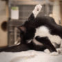 """ZIELIG: """"Kat is genoodzaakt zélf zijn bips te likken"""""""