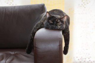 kat-poes-huisdier