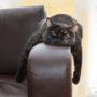 Uw kat wacht geduldig op de dood