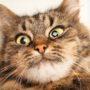 Is uw kat verstandelijk beperkt?