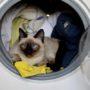 Je kat in de wasmachine… gevaarlijk of niet?