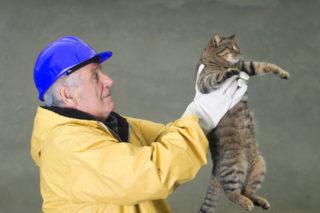 kattenverzuiper-Joop-Vlettekamp-bij-braderie