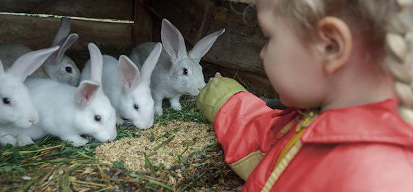 konijntjes-van-de-familie-grinsveld