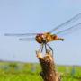 Biologen ontdekken 'natuurlijke drone'