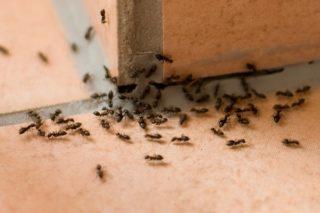 mier-mieren