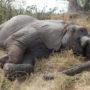 Laatste olifant Slag om Arnhem overleden