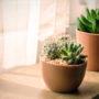 Kamerplanten vervelen zich kapot