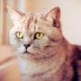 Schrödinger's kat wil tegelijkertijd zowel naar binnen als naar buiten