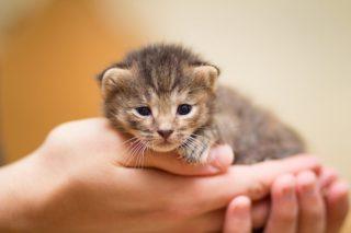 poes-kat-katten-kitten