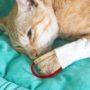 Hoera! Poes Kitty al drie jaar bloeddonor