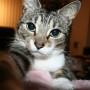 Huisdieren krijgen recht op meer privacy