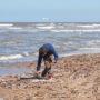 Duizenden schelpen aangespoeld aan Noordzeekust