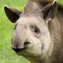 Historici: Jezus had een tapir
