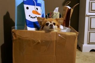 u-krijgt-een-huisdier-in-uw-kerstpakket
