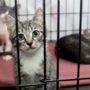 Verwaarloosde katten mogen worden afgemaakt