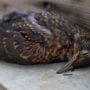 Aantal vogels drastisch afgenomen