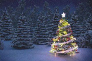 Criminelen versieren wilde kerstboom nieuwspaal