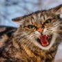 Zorgen om wilde katten