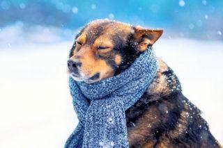 winter-hond-koud