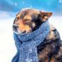 Het wordt kouder! Kleed je huisdier warm aan