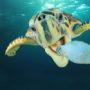 """Bioloog: """"Gooi meer plastic in de oceanen"""""""